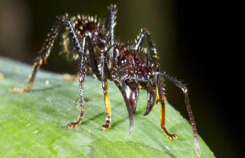 Most Dangerous Insects 12 - Most Dangerous Insects in the World -- The Deadliest Venom