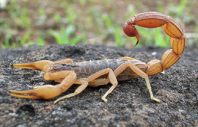 Most Dangerous Insects 13 - Most Dangerous Insects in the World -- The Deadliest Venom