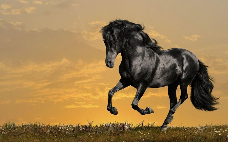 Arabian Horse - Top Most Expensive Pets in the World 2018: Most Adorable Pets