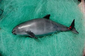 aquita 300x198 - Rare Animals Nearly Impossible to See in the World