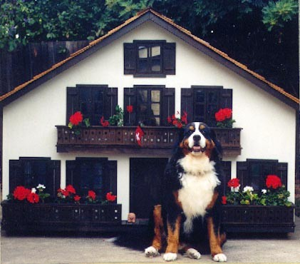 luxury dog houses 9 - Top 10 Luxury Dog Houses in the World