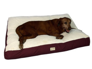 Armarkat Pet Bed Mat 300x225 - Best Dog Beds -- Complete Guide to Best Selling Dog Beds