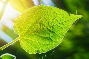 Artificial Photosynthesis 300x200 - Best Green Technologies that Can Save Our Earth