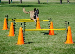 Hurdle Set for Dog Fitness and Agility 300x217 - Best Dog Agility Equipment Kits - A Complete Guide