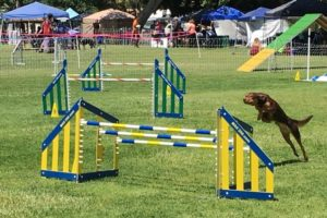 Tire Jump Weave Poles Single Jump Tunnel 300x200 - Best Dog Agility Equipment Kits - A Complete Guide