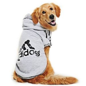 Adidog Pet Clothes 300x300 - Designer Dog Clothing - Complet Reviews for Best Dog Outfits