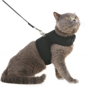 Kitty Holster Cat Harness 300x300 - Cat Harness Reviews - Full Guide for Best Cat Harness