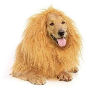 Lion Mane by Furry Fido 300x300 - Designer Dog Clothing - Complet Reviews for Best Dog Outfits